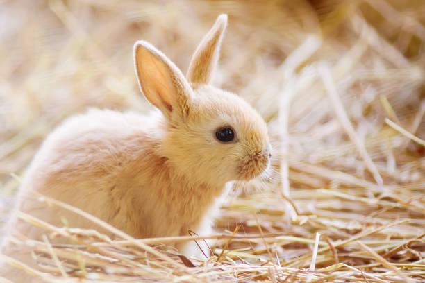 Easter. Adorable little rabbit stock photo