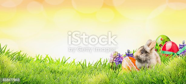 istock Easter background with bunny, eggs and flowers on grass, banner 533477943