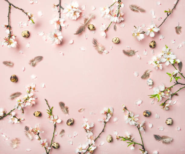 Easter background with eggs, almond flowers and feathers, copy space stock photo
