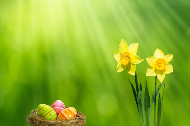 easter basket and daffodils in sunshine - buona pasqua in tedesco foto e immagini stock