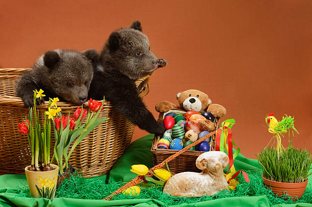 Easter bears stock photo