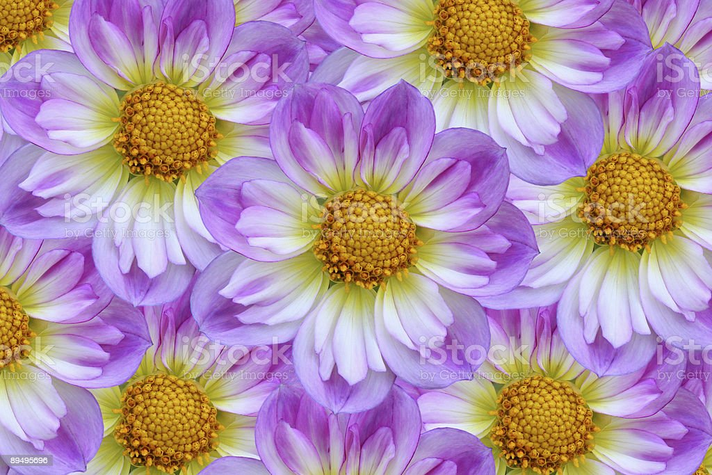 Easter Bonnet Flower Cluster - Isolated stock photo