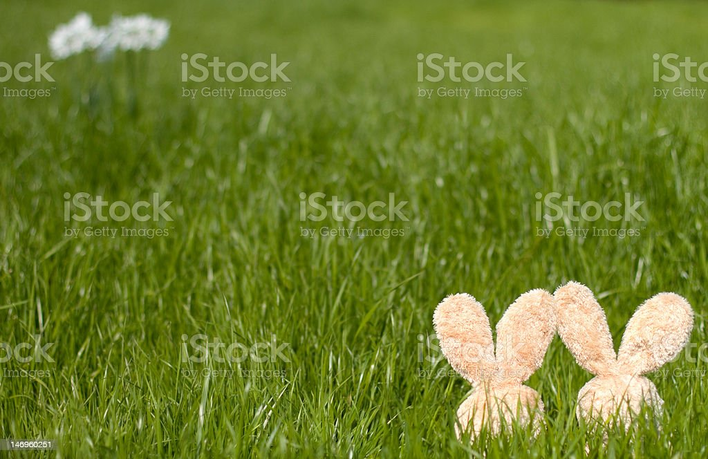 Easter Bunnies in the Meadow XXL stock photo