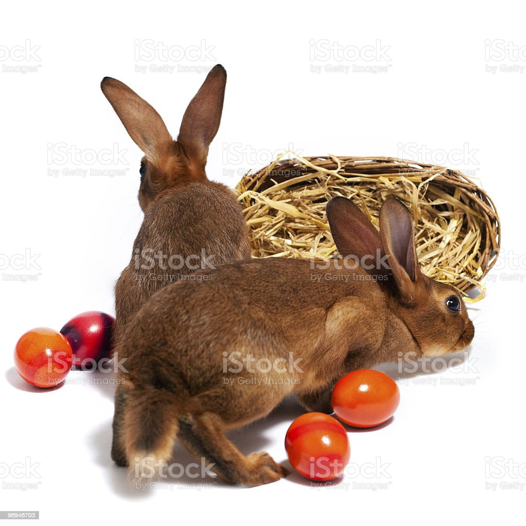 Easter bunnies with Eggs in basket royalty-free stock photo