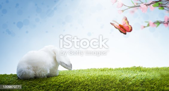 istock Easter Bunny and Butterfly 1209870771