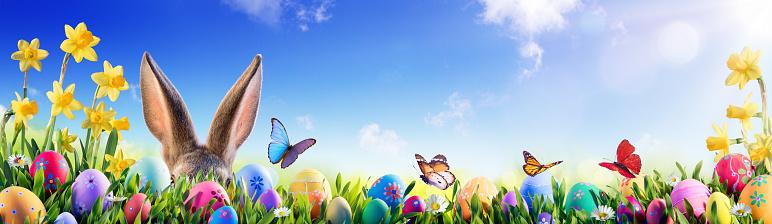 Little Bunny Hiding Meadow - Easter Card