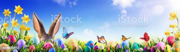 Easter bunny and decorated eggs in flowery field picture id928635814?b=1&k=6&m=928635814&s=612x612&h=btbyiuczwntlas2re 6xnwfheuh4yflkhuswul0pskq=