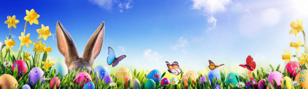 easter - bunny and decorated eggs in flowery field - easter bunny stock photos and pictures