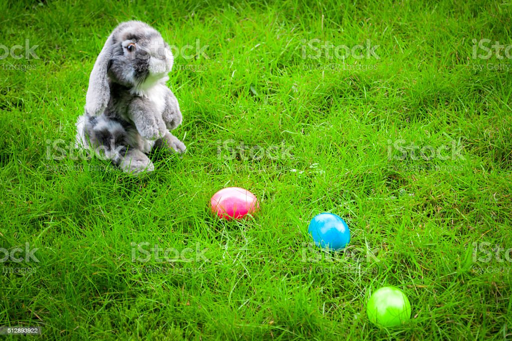 Easter bunny and eggs in a green field stock photo