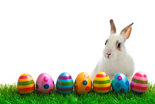 easter bunny and eggs - easter bunny stock photos and pictures