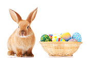 """""""Cute little bunny with eggs, isolated on whiteSee more Easter photos, click on the image below for lightbox"""""""