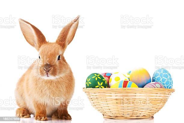 Easter bunny and eggs picture id185247559?b=1&k=6&m=185247559&s=612x612&h=jdo  w9p1vmtp7wtntzs okfmnwovhdqafszgamlrzq=