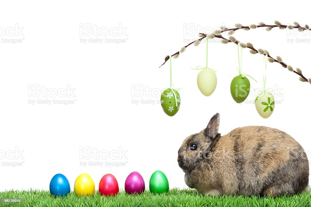 Easter bunny at lawn with colorful eggs and pussy willow royalty-free stock photo