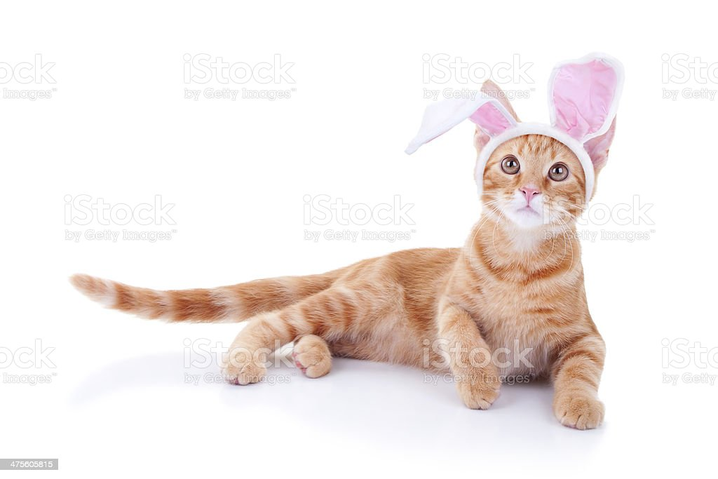 Easter Bunny Cat stock photo