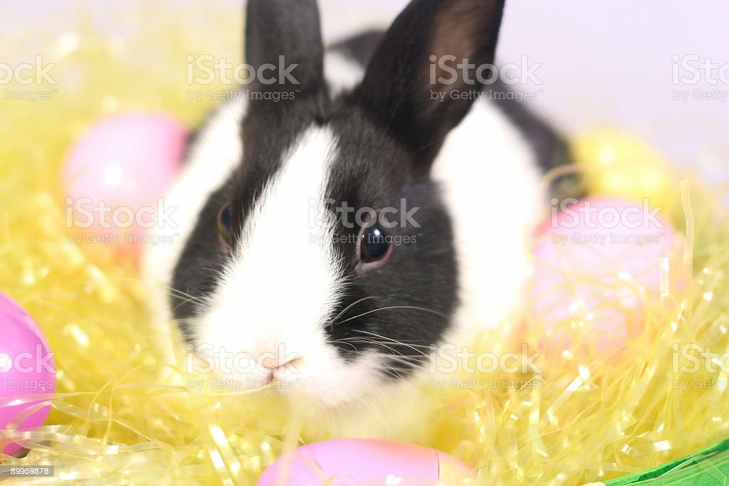 Easter Bunny - Close Up royalty-free stock photo