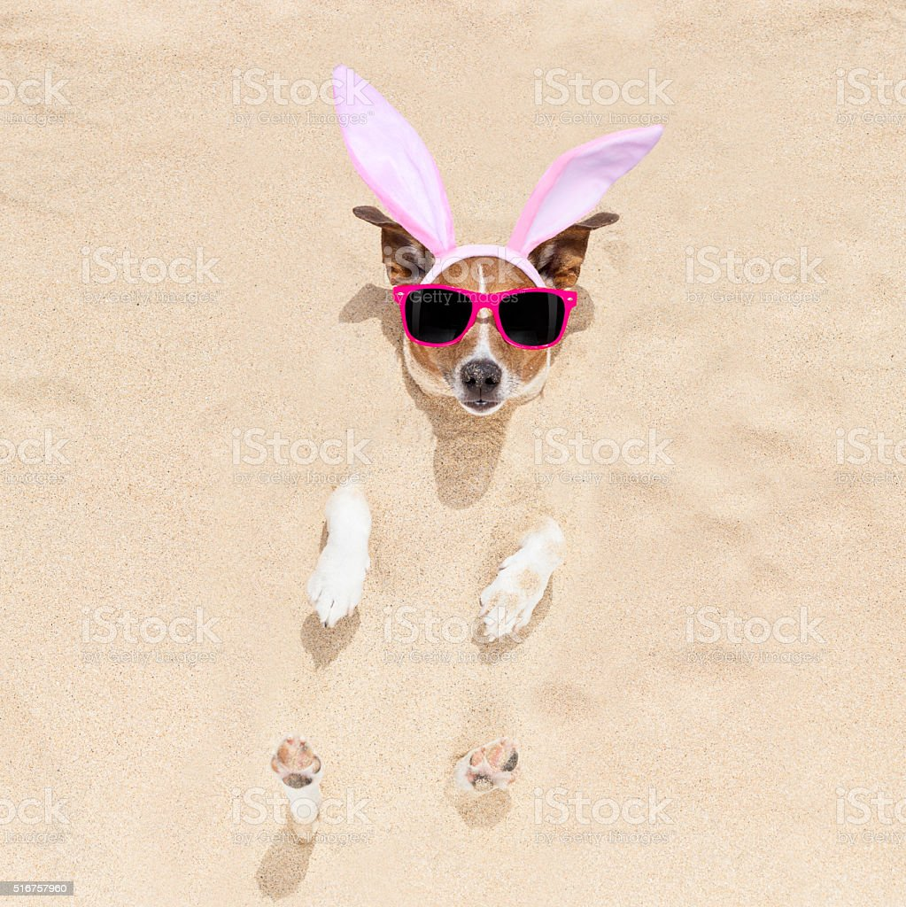 easter bunny dog in bed stock photo