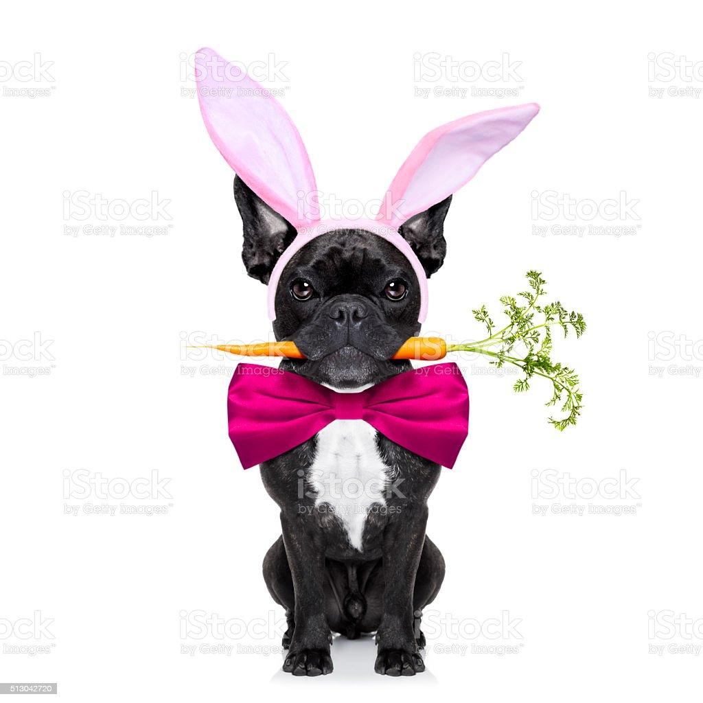 easter bunny dog stock photo