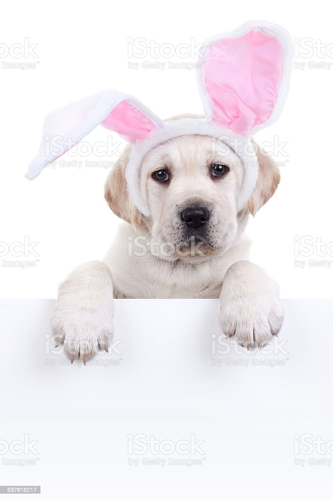 Easter Bunny Dog Sign stock photo