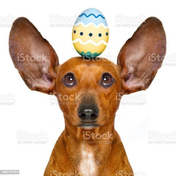 Easter bunny dog with egg picture id655181914?b=1&k=6&m=655181914&s=612x612&h=ji3enh7n  lh 17ggulm7rhjrpvjnxfxrer40 wlhlo=