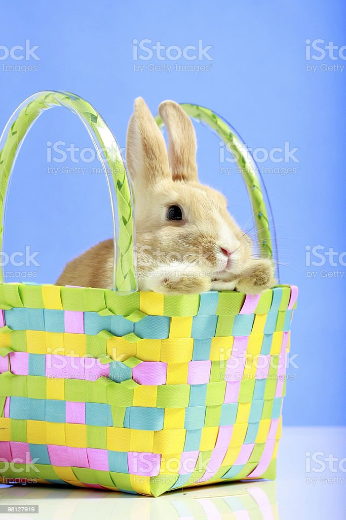 Easter bunny in a basket royalty-free stock photo