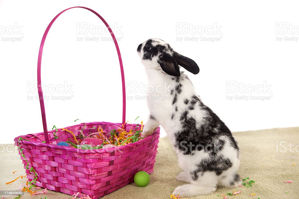 Easter Bunny in Action royalty-free stock photo
