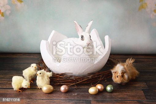 A rabbit sits in an egg shell, surrounded by easter eggs, chicks, and her best friend, a guinea pig.
