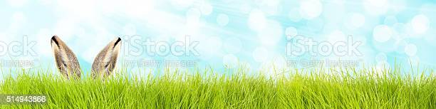 Easter bunny in grass background picture id514943866?b=1&k=6&m=514943866&s=612x612&h=vjyg756vc 6cnrufffovg0vylc6lyuxfvnswob8zuko=