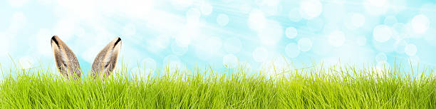 easter bunny in grass background stock photo