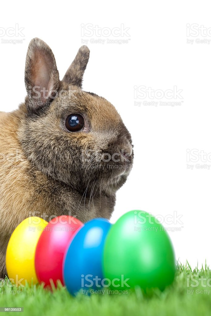 Easter bunny in grass beside green, red and blue eggs royalty-free stock photo