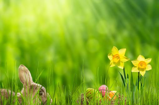 easter bunny in idyllic springtime landscape