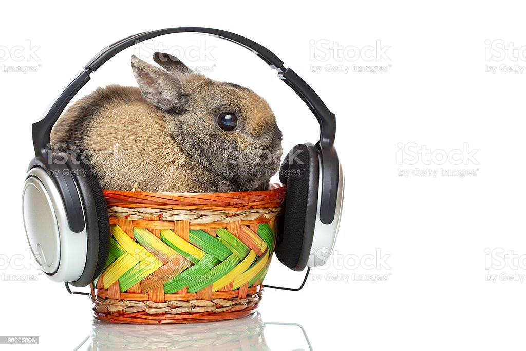Easter bunny listening to mp3 player music with headphones royalty-free stock photo