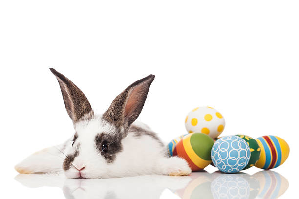 easter bunny lying down with eggs - easter bunny stock photos and pictures
