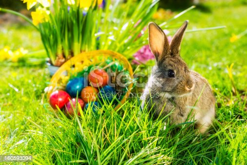 istock Easter bunny on meadow with basket and eggs 160593094