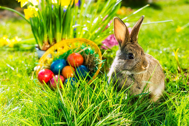 easter bunny on meadow with basket and eggs - easter bunny stock photos and pictures