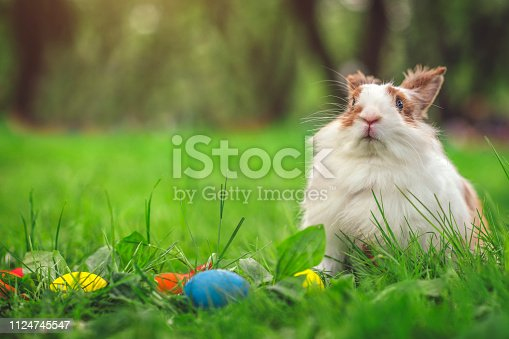 istock Easter bunny on meadow with colourful eggs 1124745547
