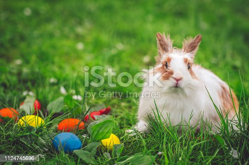 istock Easter bunny on meadow with colourful eggs 1124745696