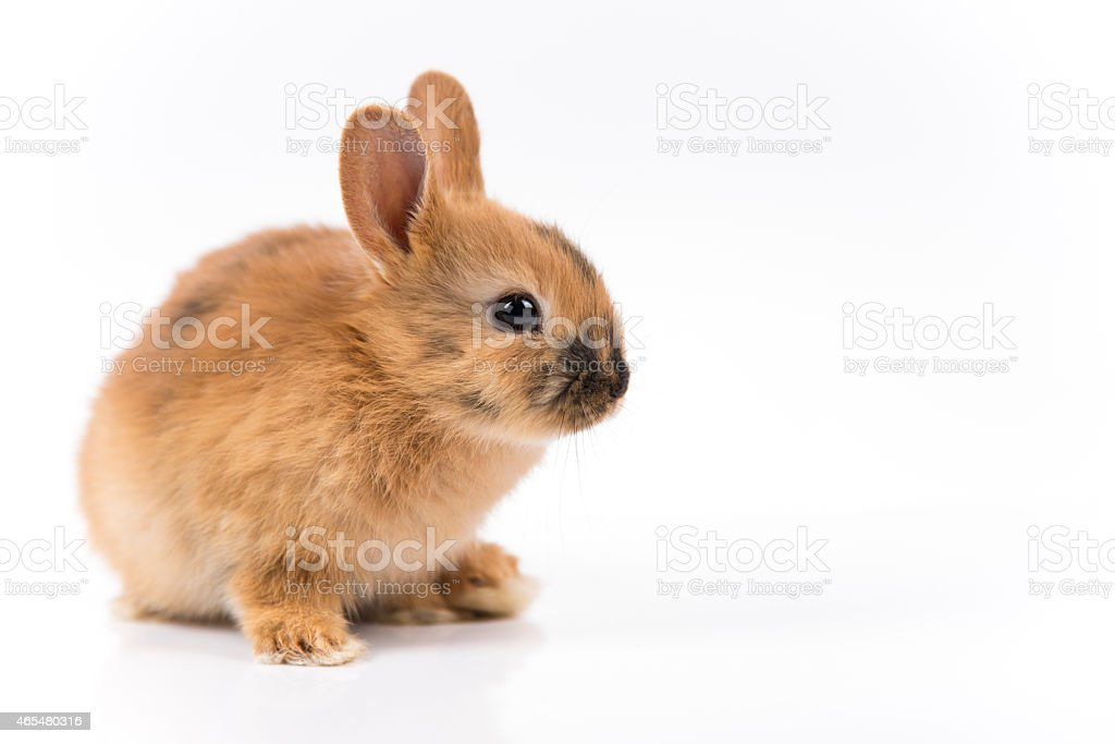 Easter bunny on white background isolated stock photo