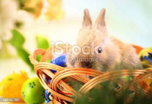 istock Easter bunny. 155162101