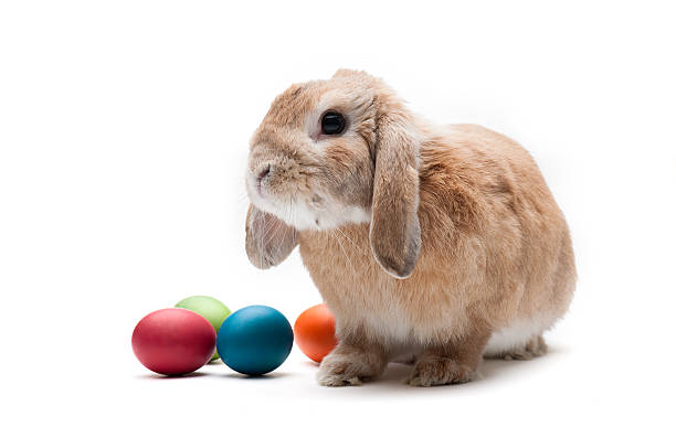 easter bunny - easter bunny stock photos and pictures