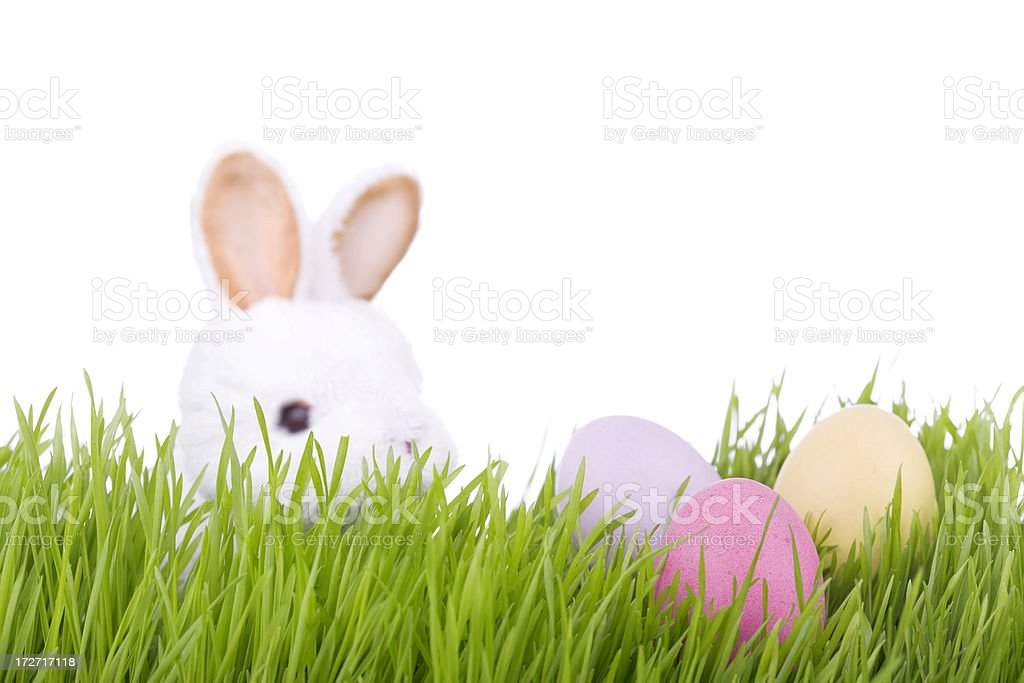 Easter Bunny (XL) royalty-free stock photo