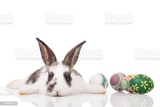Easter bunny picture id174979112?b=1&k=6&m=174979112&s=612x612&h=qjrrzit8sehktpsf49yffau9lf80fzrts zmtiitfd4=