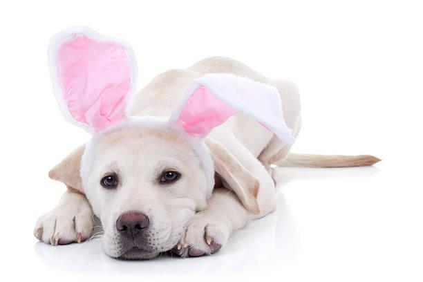 Easter bunny picture id478609393?b=1&k=6&m=478609393&s=612x612&w=0&h=kitkulbwibupq0ld6igde3jb2a22orll noccomtcv4=