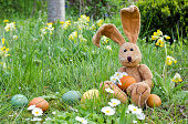 Easter bunny with easter eggs and daisies