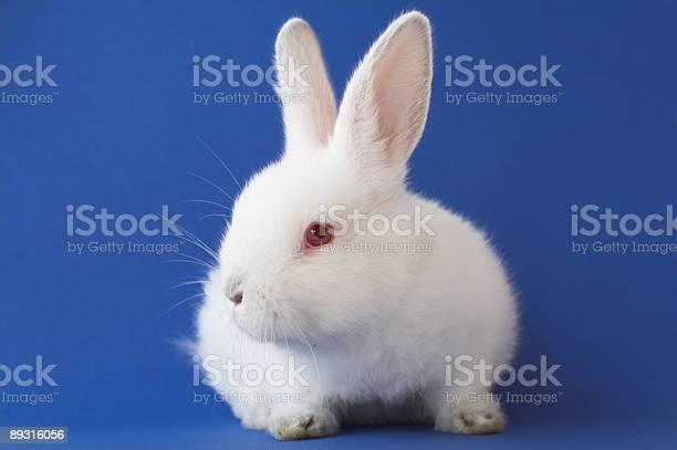 Easter bunny picture id89316056?b=1&k=6&m=89316056&s=612x612&h=fnqk0wqac udfgzxdpzymvm93gnn  hs9pbn8un4bv0=