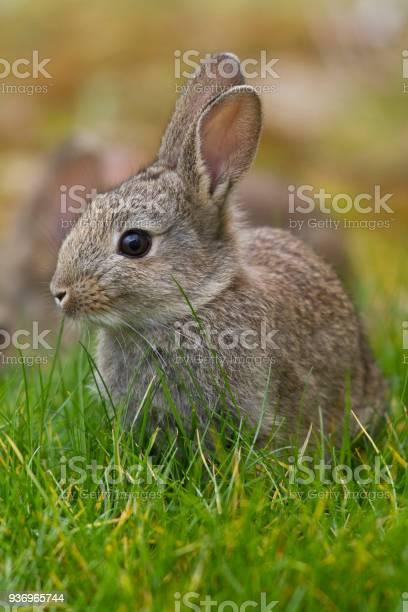 Easter bunny picture id936965744?b=1&k=6&m=936965744&s=612x612&h=iiouuw3f4zh802 ycbcievj wgcfb8aad1nrwtijwli=