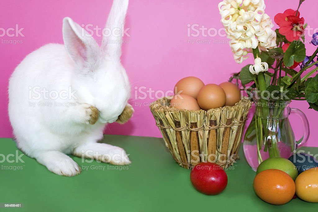 Easter Bunny - Playing Hide And Seek royalty-free stock photo
