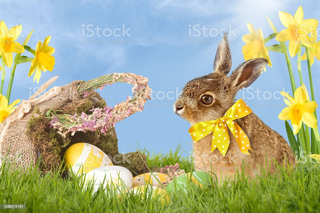 Easter bunny sitting beside basket with Easter eggs in grass stock photo