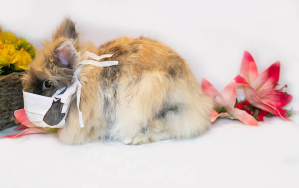 Easter Bunny Wearing Covid-19 Coronavirus Health Mask stock photo
