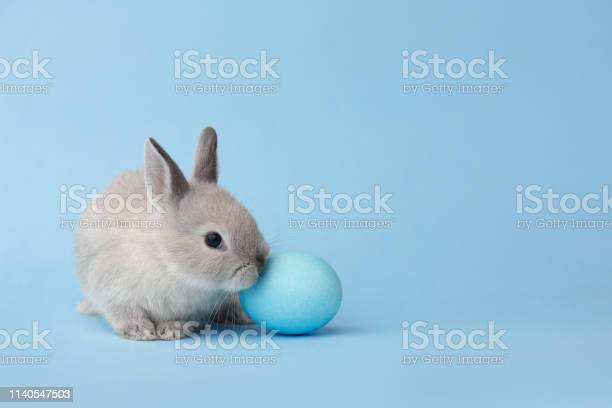 Easter bunny with egg on blue background picture id1140547503?b=1&k=6&m=1140547503&s=612x612&h=acs6vzezcfwmp7yjbb3hp7t buatwbvjurjmlvz0ata=