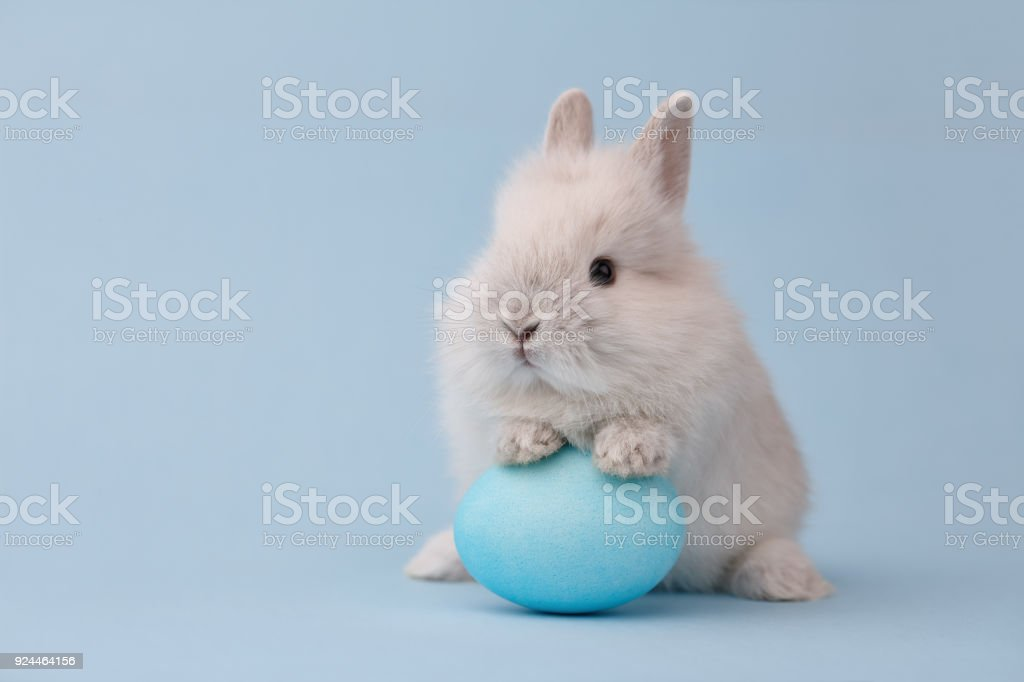 Easter bunny with egg on blue background royalty-free stock photo